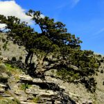 sights_page_mount-3